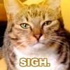 lysanatt: (Kitty: Sigh)