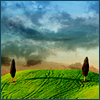 auburn: Two cypress trees on a green hill against a stormy sky (Two Trees)