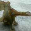 eightlazylegs: A brownish octopus walking and pointing (Walking)