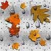 levkonoe: (мокрые листики)