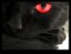 raspberry_moonlight: Animal form (Default)