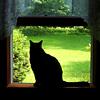 auburn: (Changeling Cat)