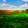 auburn: (Red Clay Road, Green Field)