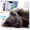 ext_2667: (Happy cat)