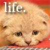 premorbidly: (depressed kitty)
