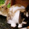 keieeeye: (bunnies :D)