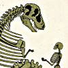 brownbetty: Dinosour and human skeleton, facing, palms up in offering (My hart.  Let me show you it.)