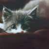 printerer: (kitten)