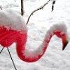 blairmacg: (Snowmingo1)