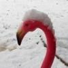 blairmacg: (Snowmingo2)