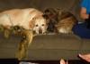 blairmacg: (CuddlePuppies)