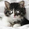 ofschrodinger: (Kitten)