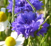 klia: (flowers)