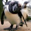 made_with_love: (пингвин)