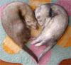 cyrano: (Weasel Love)