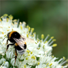 kohaku: (Summer_bumblebee)