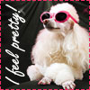 chomiji: A white poodle dog wearing pink sunglasses and toenail polish, with the caption I Feel Pretty! (Pretty Poodle)