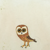 sushiflop: (owl; small and watching you.)