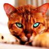 rising: a kitty with very piercing eyes (the cadre: kitty eyes)
