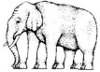 pseudomonas: Elephant with some legs. (elephant)