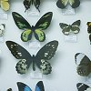 prettyghost: (butterflies)