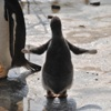 ettegoom: (Happy penguin dance)