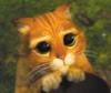 kerydan: (Cat)