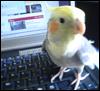 redbirds: (pepper)