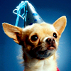 andisaysboo: (Party Chihuahua)