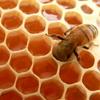 honeybeespit: (hsb)