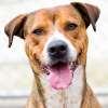 samvara: Kiba the dog (Kiba)