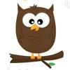 birdsofprey: brown owl (brown owl)