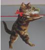 hhw: (puddin' cat)