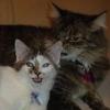 subluxate: (Animals: Hawk and Ava (faces))