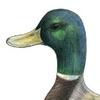 gerald_duck: (by Redderz)