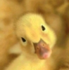 gerald_duck: (Oh really?)