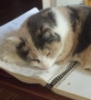 mia_fitzroy: (Kitten)