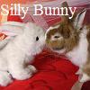 pumpkin_tart: (Silly Bunny)