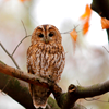 rj_anderson: (Owl in a Tree)