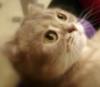 positiveview: (кошка)