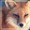 aikea_guinea: (Fox - Face)