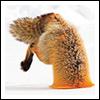 aikea_guinea: (Fox - Snow)