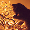 ptahrrific: Cat with Christmas lights (christmas)