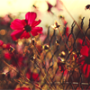 gwinna: (flowers - red)