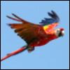toughmama: (Gunner: Flight)