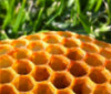 apiary: piece of honeycomb lying on grass (honeycomb) (Default)