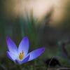 gwinna: (flowers - pastel)
