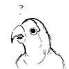 pseudogeek: A bird with a puzzled face.  (?)