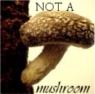 yarngeek: I am NOT A MUSHROOM (not a mushroom)