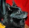 eldriwolf: Shorty at P-con, 09 (Shorty. P-con)